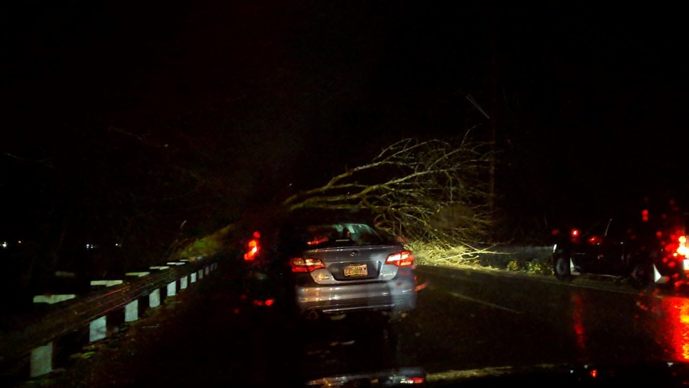 Fallen tree delays traffic on Highway 99W southbound near