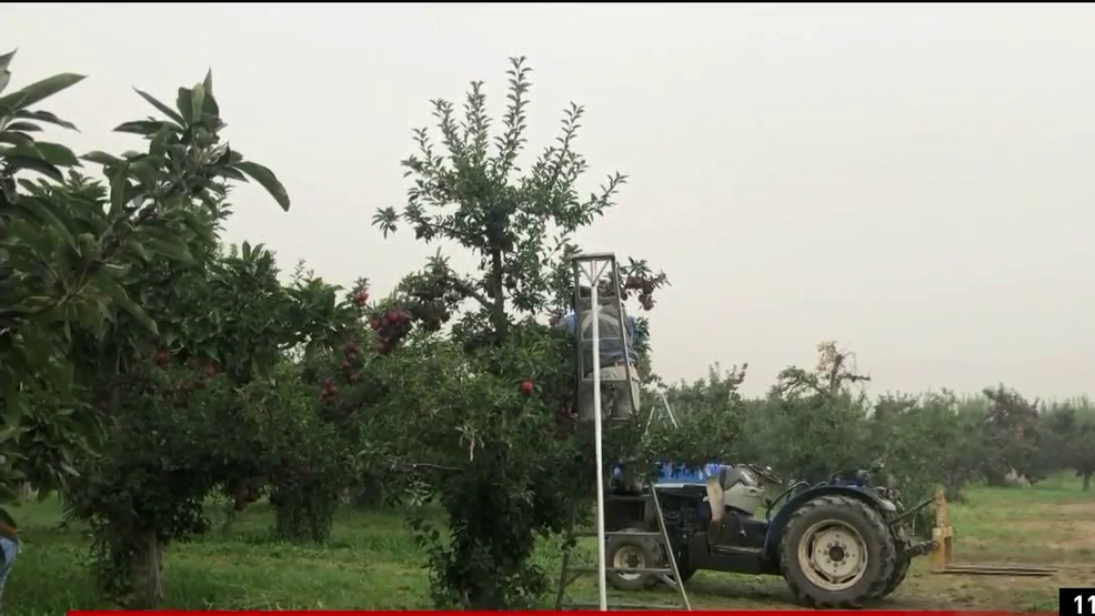 Poor air quality impacts Oregon farm workers already facing pandemic  challenges   KATU