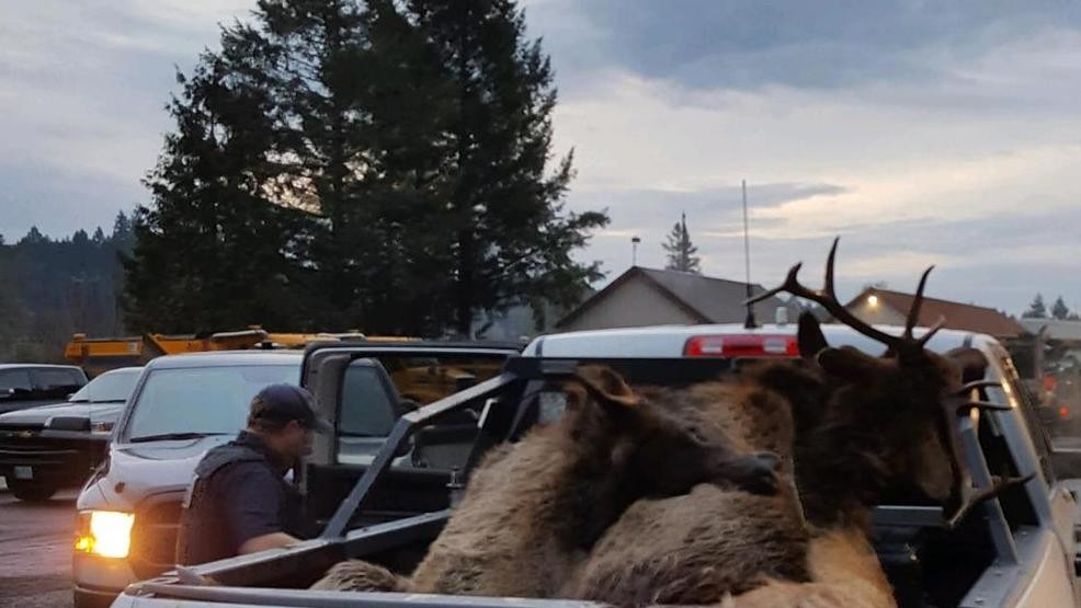 Deputies: Driver hit herd of elk on Highway 26 | KATU