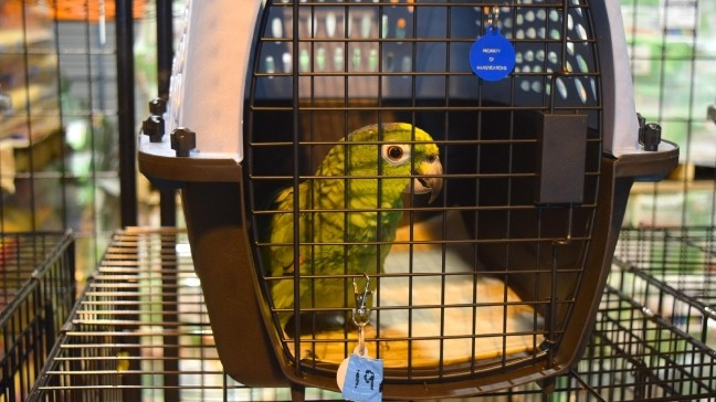 Dozens of birds rescued from 'terrible conditions' in Damascus now
